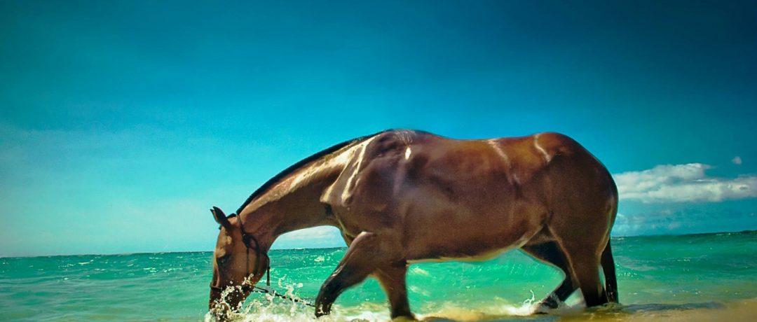 [Photography] C.J. DeWolf : Horses in Hawaï