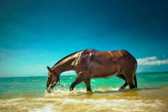 [Photography] C.J. DeWolf : Horses in Hawaï