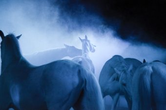 [Equestrian Photography] Ilja Holodkov
