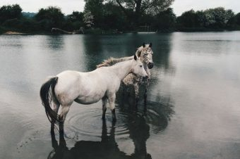 [Equestrian Photography] Stian Lothe : Horses