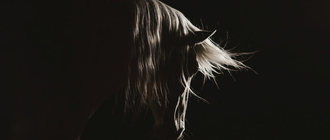 [Equestrian Photography] Malin Wengdahl playing with lights
