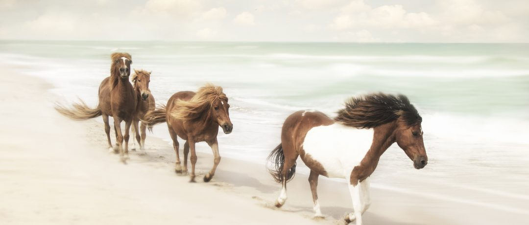 [Photography] Jan Lakey : Wild Horses