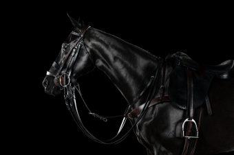 [Photography] Ramon Casares : polo ponies