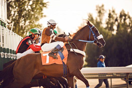 [Photography] Kristoffer Perlada : Riyadh Horse Racing