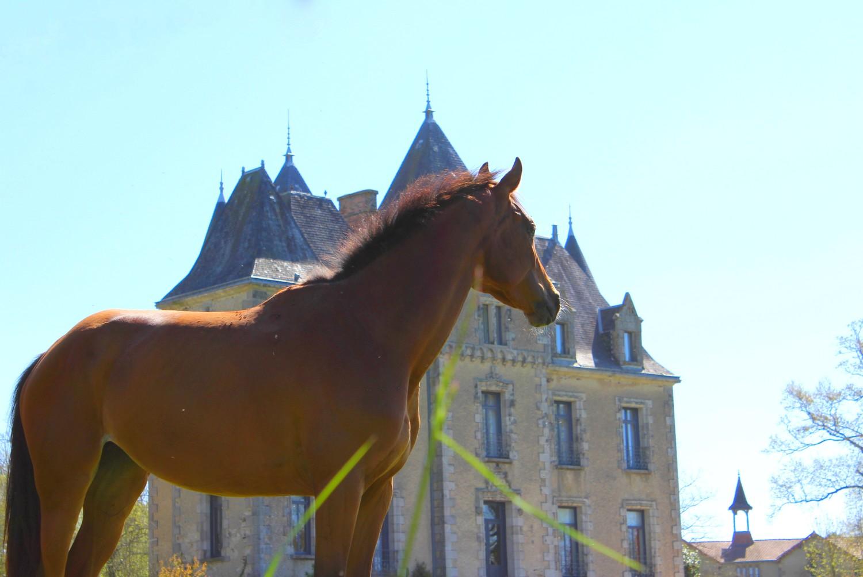 www.pegasebuzz.com | Dream Barn : Equimov présente le Domaine de Brandois.