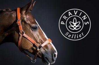 [Equestrian Fashion] Les licols en cuir de couleur de l'Atelier Pravins