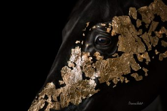 [Equestrian Photography] Diana Wahl : le cheval est d'or