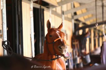 [Behind My Lens] Polo Club du Domaine de Chantilly