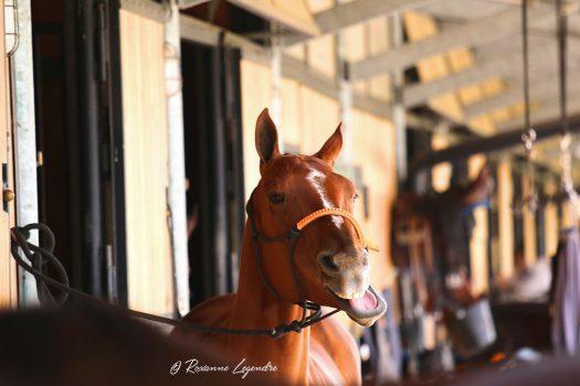[Behind My Lens] Polo Club du Domaine de Chantilly