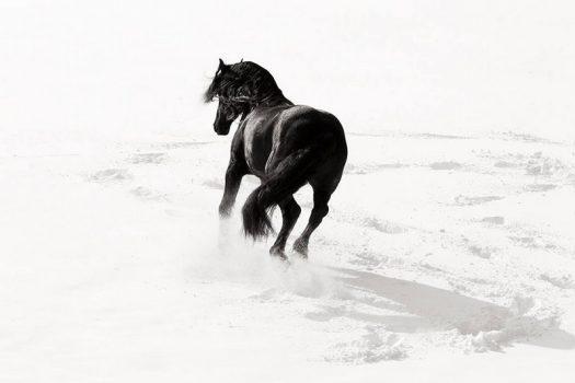 [Equestrian Photography] Mark Harvey : Horses