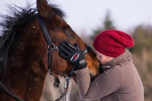 Mon cheval a-t-il besoin d'une assurance ?
