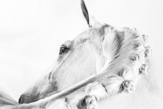 [Equestrian Photography] Les crinières de Philippa Davin