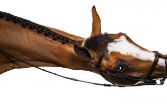 [Equestrian Photography] Kaitlyn Karssen #2