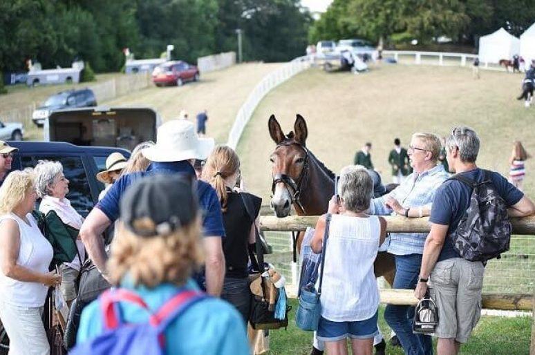 La FEI interdira bientôt les têtes de mule en compétition