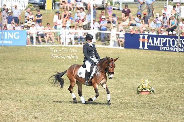 www.pegasebuzz.com   Wallace, the dressage mule.
