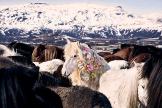 [Photography] Gray Malin : des chevaux islandais pas comme les autres