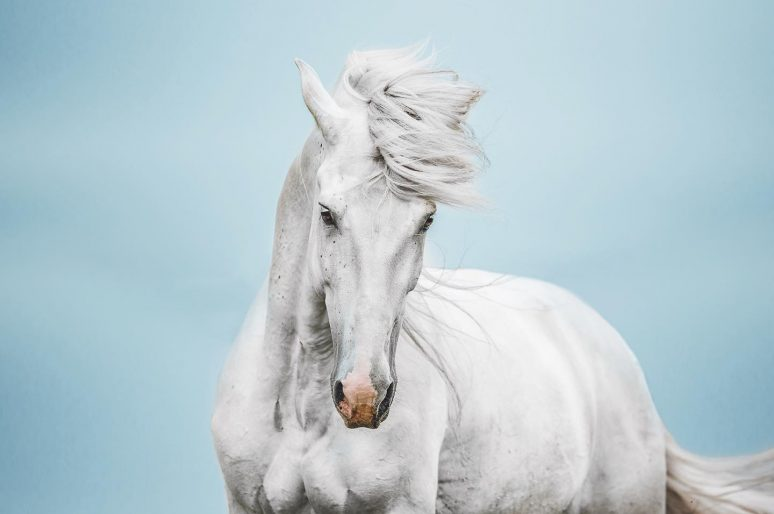 [Photography] Isabel Brune : rêves de chevaux