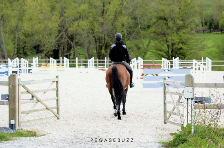 Confinement Covid-19 : que deviennent les chevaux de propriétaires ?