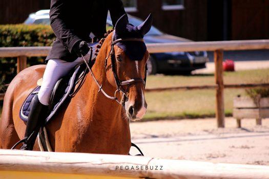 Covid-19 : quand la Fédération Française d'Équitation perd 40 000 licenciés