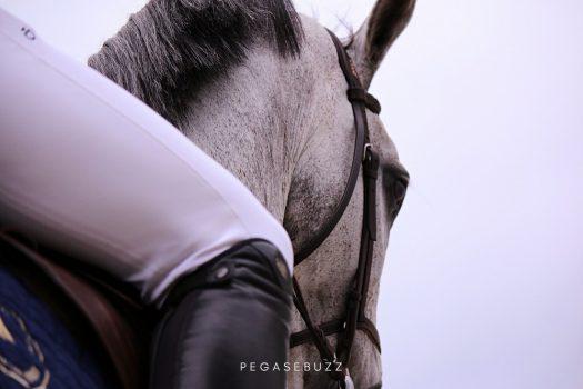 Quelle pérennité pour les sports équestres à l'ère de l'antispécisme ?