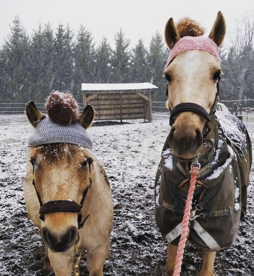 www.pegasebuzz.com   Pom pom toque for horses : Horse & Dog Show.