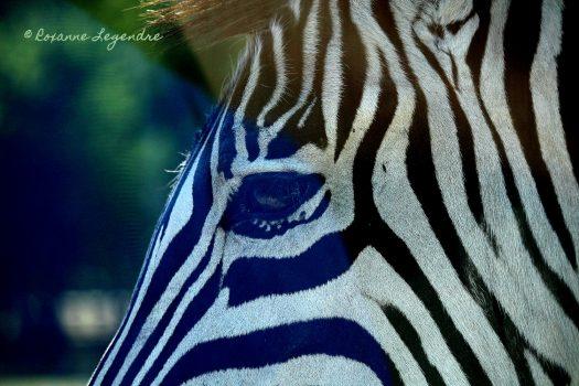 [Photography] Roxanne Legendre : Parc zoologique de Thoiry
