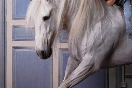 [Vintage Fashion Equestrian] Vogue France et cheval blanc