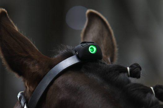 [Innovation] Le capteur VERT indique l'attitude de votre cheval en temps réel