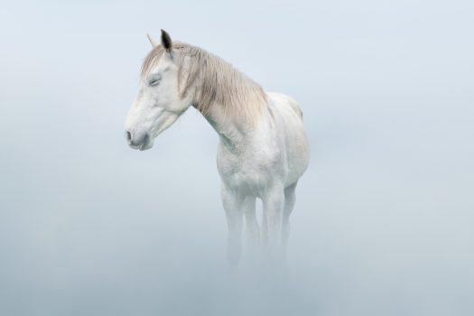 [Equestrian Photography] Petros Koublis : Dreams