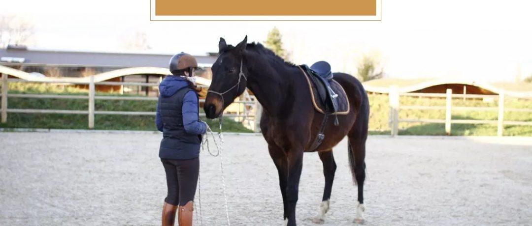 [Bien-Être] The Tack Room, la formation en ligne des propriétaires de chevaux