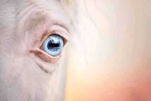 [Equestrian photography] Elina Lindgren – Horses