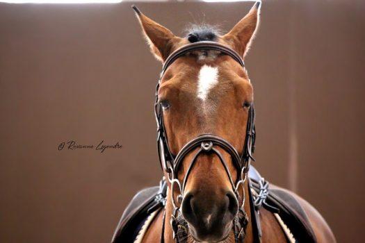 L'impact de l'éclairage sur le bien-être et la performance du cheval