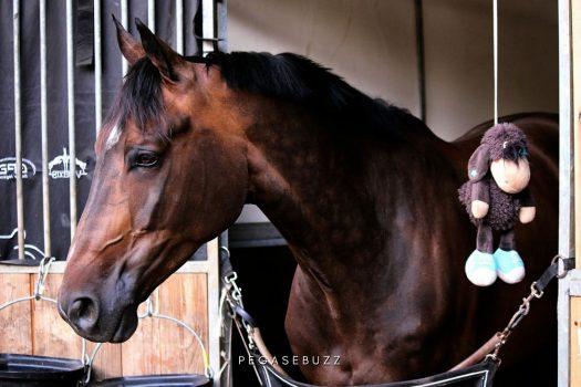 Covid-19 : pourquoi l'écurie du cheval de sport d'aujourd'hui doit changer