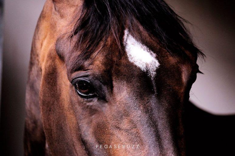 Société : Les chevaux n'ont jamais autant fait partie de nos vies