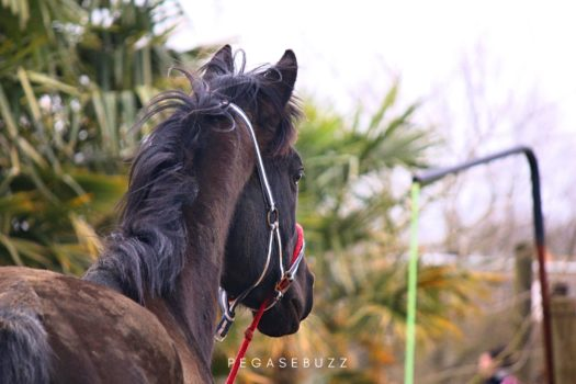 [Bien-Être] Pourquoi les chevaux ne sont pas des biens de consommation